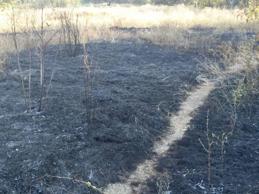 В Мариуполе зеленые зоны Приморского парка превращают в черные (ФОТОФАКТ) (фото) - фото 3
