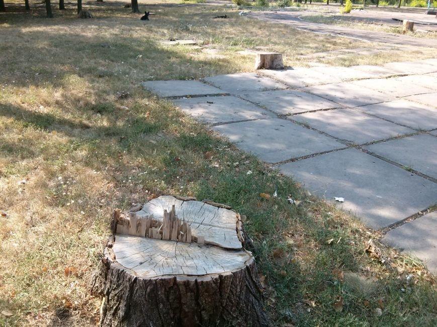 Мариупольцев возмутило продолжением уничтожения деревьев в Приморском парке (ФОТО) (фото) - фото 2