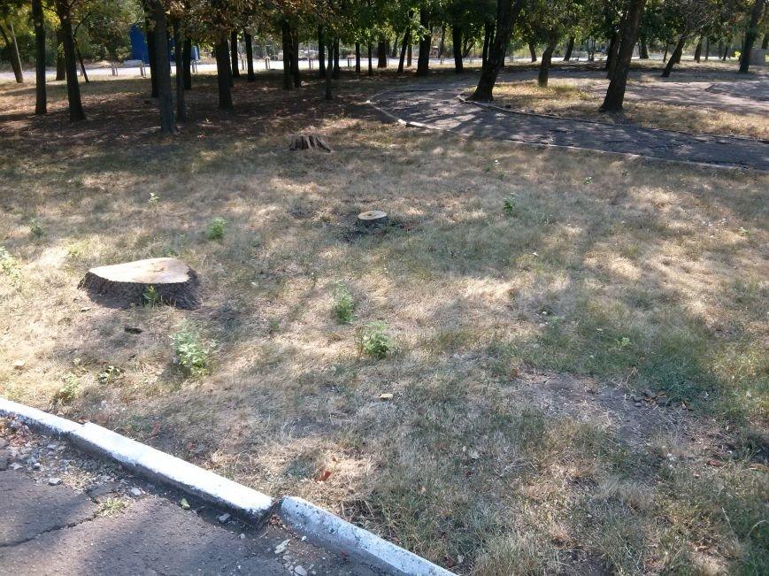 Мариупольцев возмутило продолжением уничтожения деревьев в Приморском парке (ФОТО) (фото) - фото 4