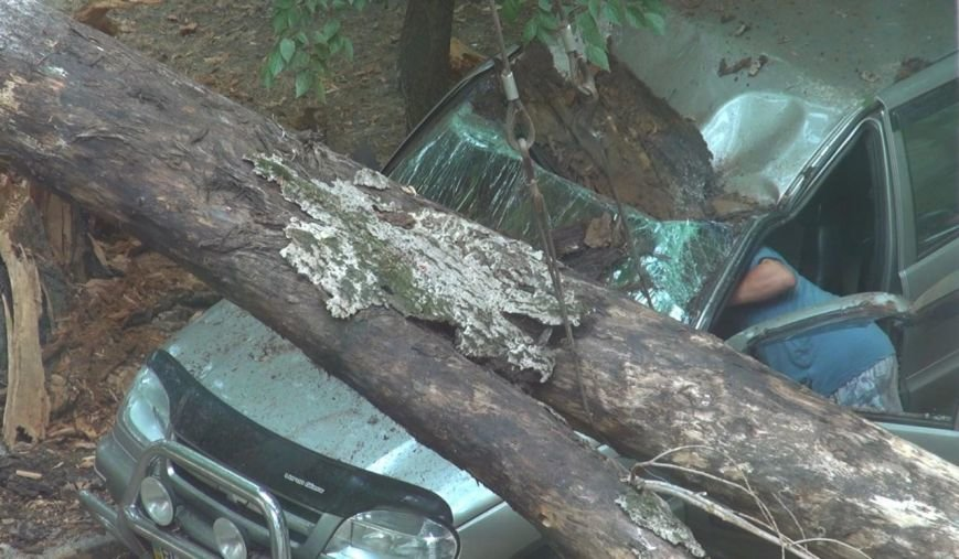 На одесской стоянке огромное дерево раздавило машину (ФОТО) (фото) - фото 1