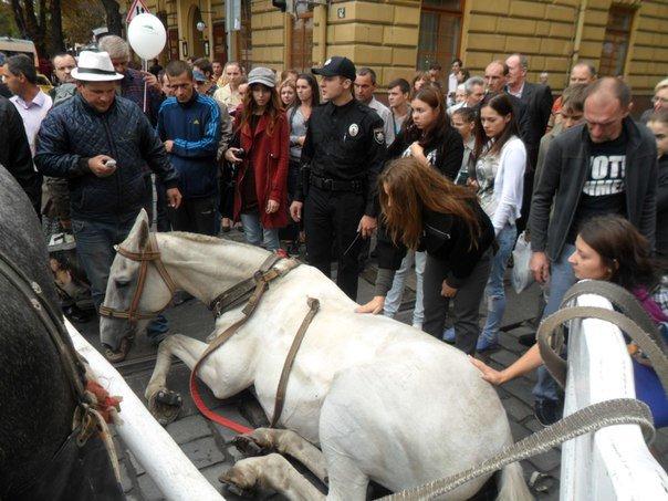 У центрі Львова перехожі стали на захист травмованого коня, якого копав фірман (ФОТО+ВІДЕО) (фото) - фото 1