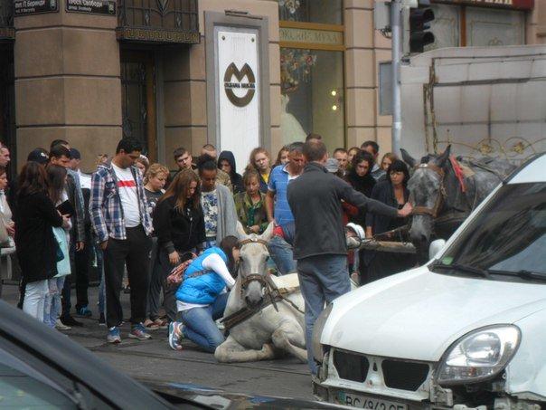 У центрі Львова перехожі стали на захист травмованого коня, якого копав фірман (ФОТО+ВІДЕО) (фото) - фото 3