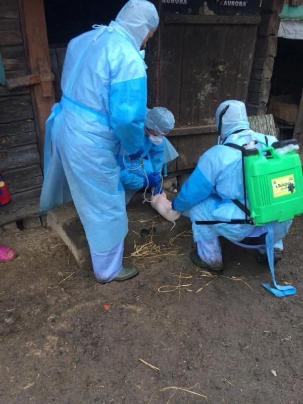 На Рівненщині борються із африканською чумою свиней (фото) - фото 2