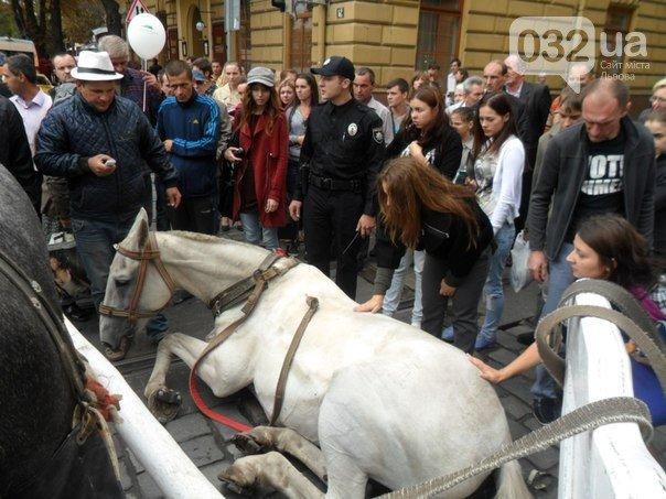 Львів'яни створили петицію до Садового, з вимогою припинити у місті жорстоке поводження із конями (ФОТО) (фото) - фото 1