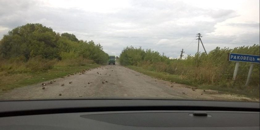 На Тернопільщині ями на дорогах «латають»... цукровими буряками (фото) - фото 1