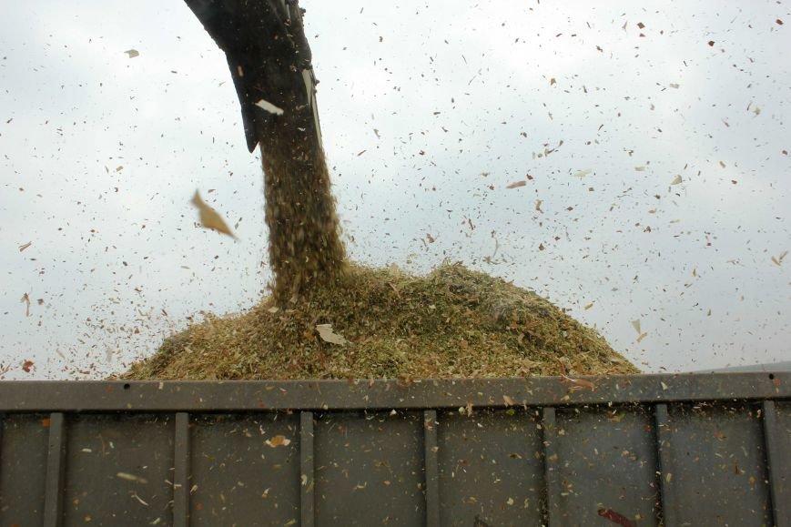На Тернопільщині бучацькі аграрії завершують заготівлю високопоживного корму (ФОТО), фото-2