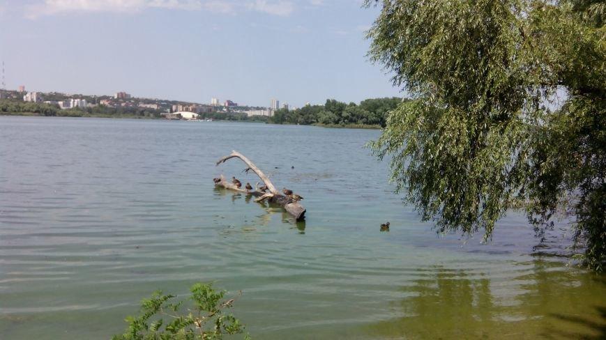 Днепропетровские утки решили не лететь на зимовку, фото-1