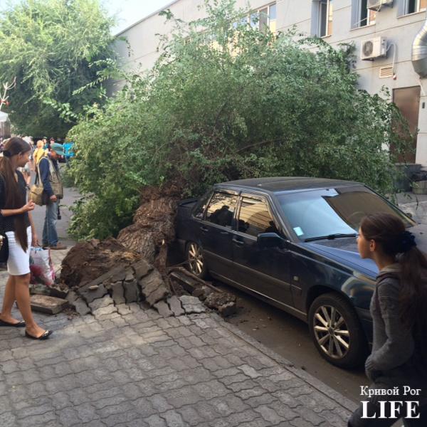 На центральной улице Кривого Рога дерево неожиданно свалилось, придавив автомобиль (ФОТО) (фото) - фото 1