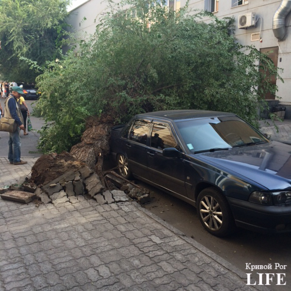 В Кривом Роге: на пожаре погибла старушка, дерево рухнуло на автомобиль, а бойцы 54 бригады показали, чем их кормят на фронте (фото) - фото 2