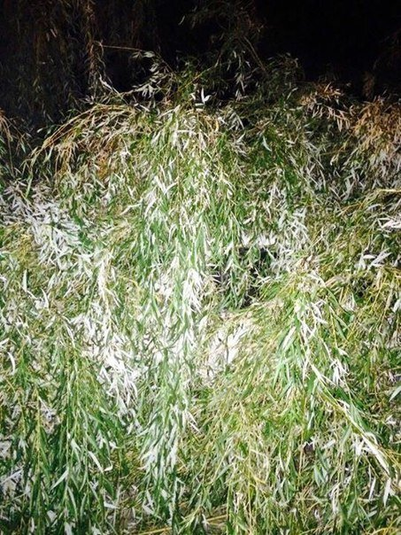 На вул. Патона впало дерево на три автівки (ФОТО) (фото) - фото 1