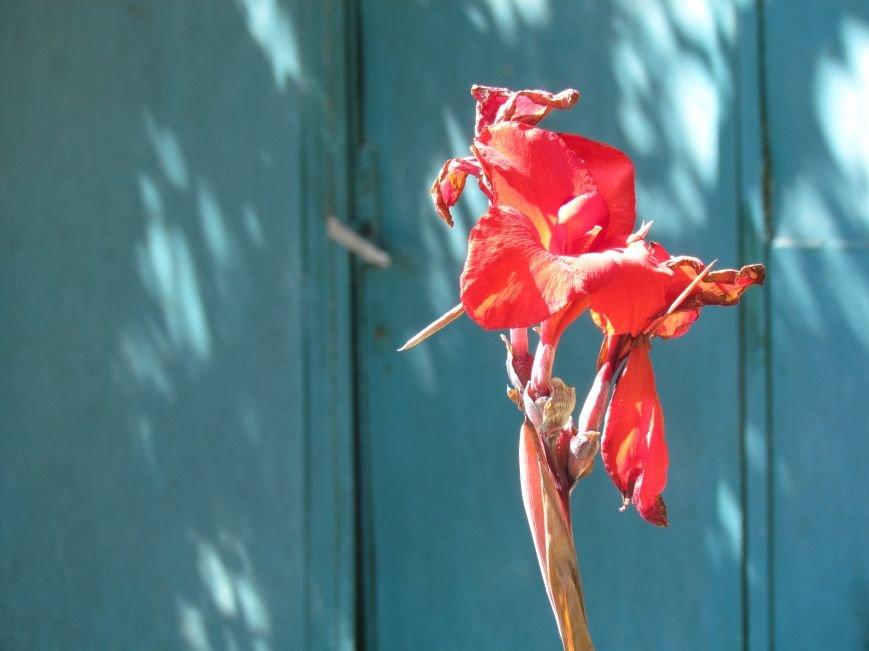 Фотопятница: «Цветы «африканской» осени», фото-22