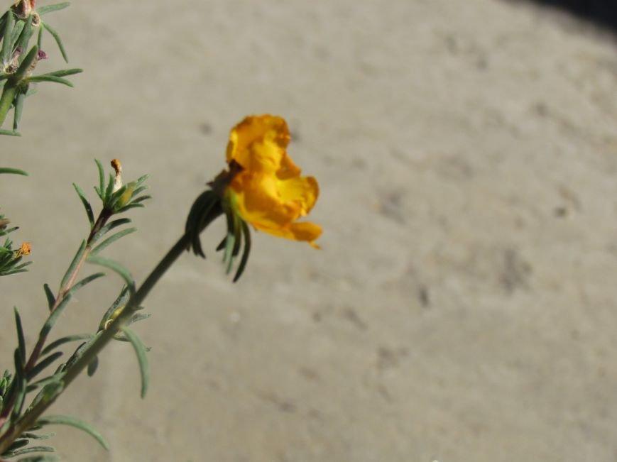 Фотопятница: «Цветы «африканской» осени», фото-21
