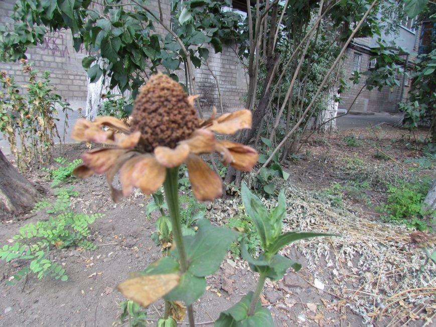 Фотопятница: «Цветы «африканской» осени», фото-2