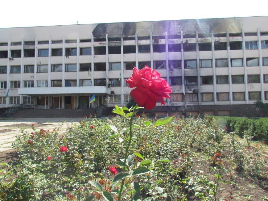 Фотопятница: «Цветы «африканской» осени», фото-1