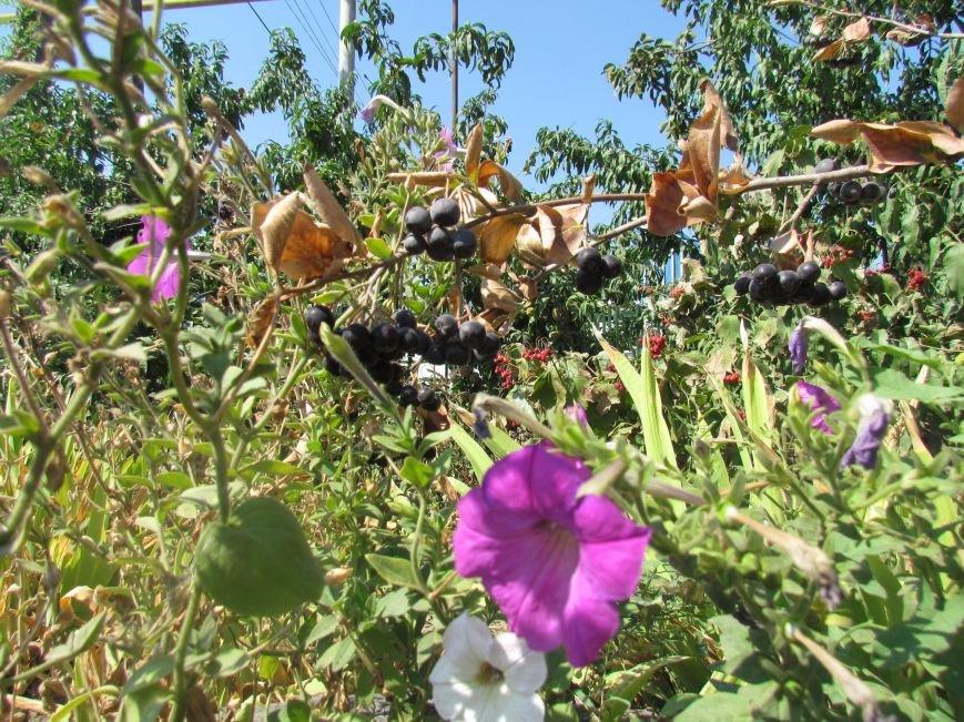 Фотопятница: «Цветы «африканской» осени», фото-30