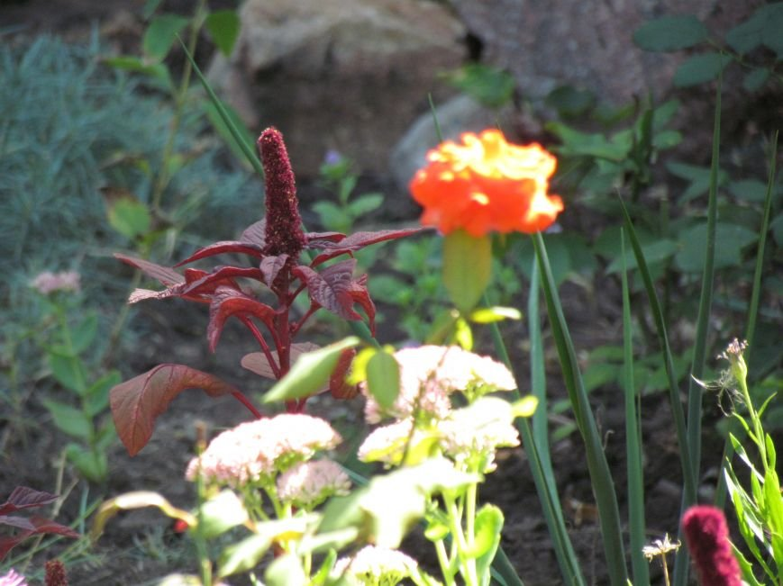 Фотопятница: «Цветы «африканской» осени», фото-13
