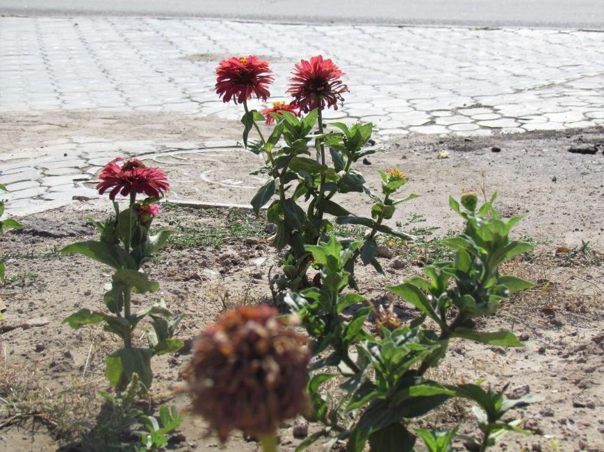 Фотопятница: «Цветы «африканской» осени», фото-10