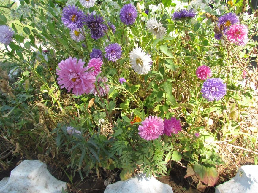 Фотопятница: «Цветы «африканской» осени», фото-28