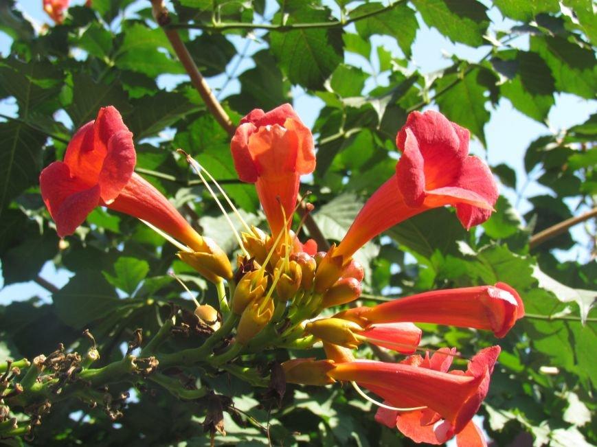 Фотопятница: «Цветы «африканской» осени», фото-32