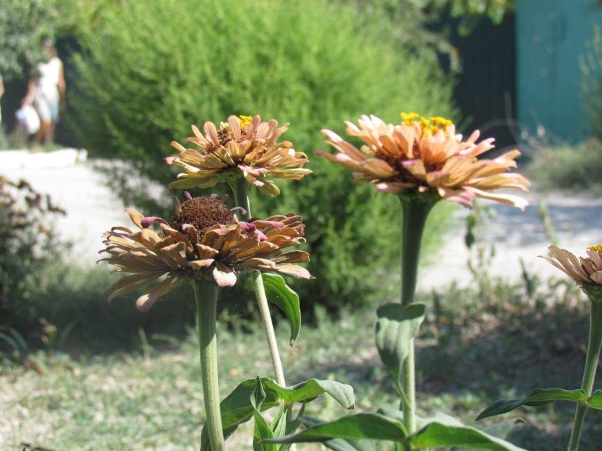 Фотопятница: «Цветы «африканской» осени», фото-17
