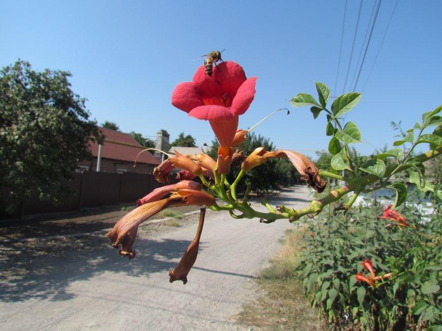 Фотопятница: «Цветы «африканской» осени», фото-24