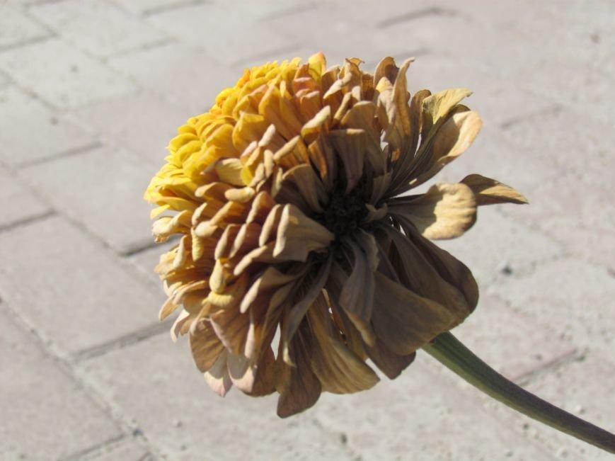 Фотопятница: «Цветы «африканской» осени», фото-23
