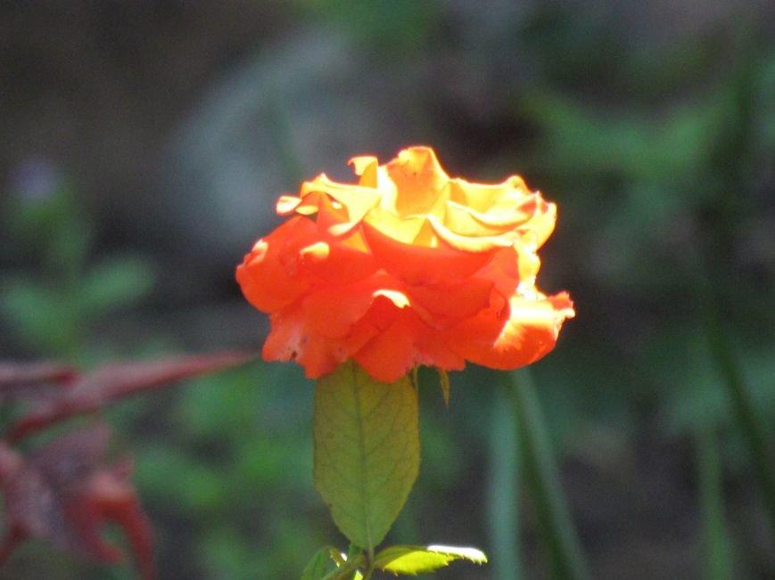 Фотопятница: «Цветы «африканской» осени», фото-3