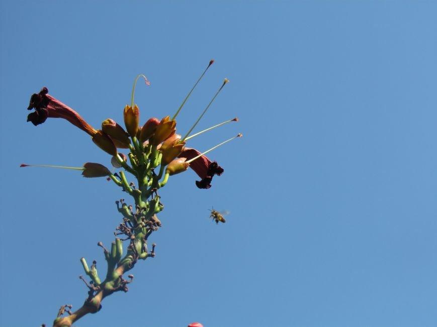 Фотопятница: «Цветы «африканской» осени», фото-27
