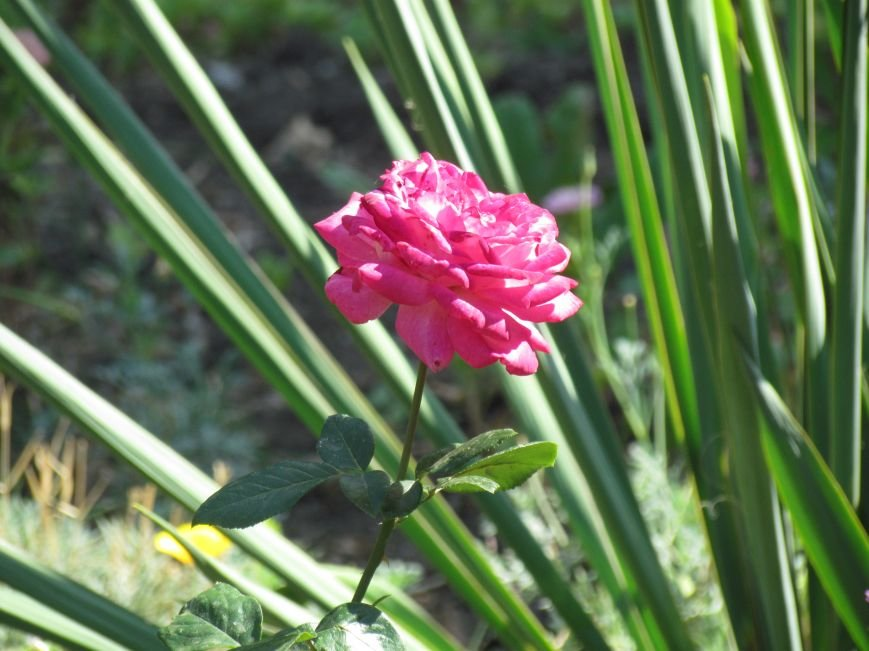 Фотопятница: «Цветы «африканской» осени», фото-6