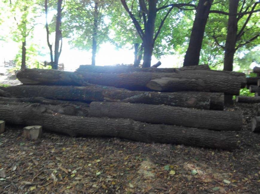 У Чернівцях у парку «Жовтневому» незаконно вирубали ліс, фото-1