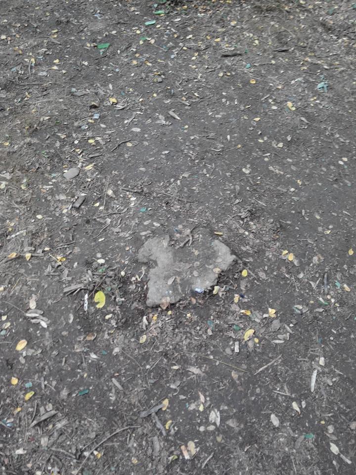 У Чернівцях у парку «Жовтневому» незаконно вирубали ліс, фото-3