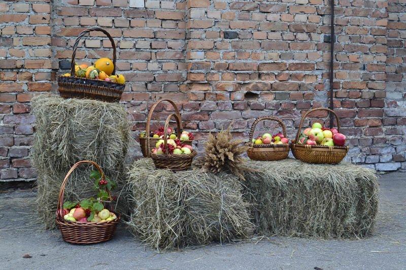 Осенний праздник в Александровском парке « Яблочный полдень» (фото) - фото 4
