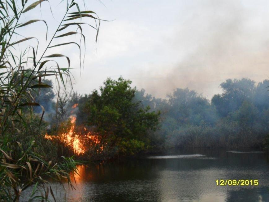 В Кривом Роге браконьеры подожгли камыш в центре города (ФОТО) (фото) - фото 1