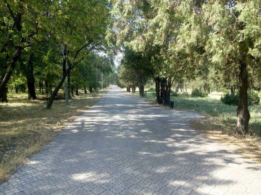 В Мариуполе в парке им. Петровского не осталось ни одной скамейки (ФОТО), фото-4