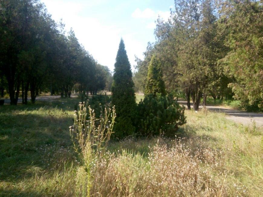 В Мариуполе в парке им. Петровского ни осталось ни одной скамейки (ФОТО) (фото) - фото 1
