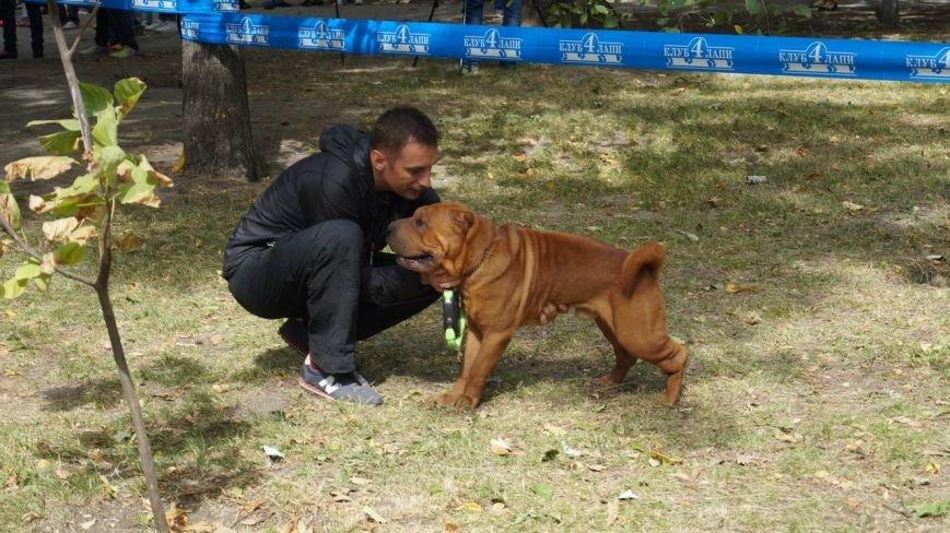 Выставка собак прошла в Бердянске (фото) - фото 1