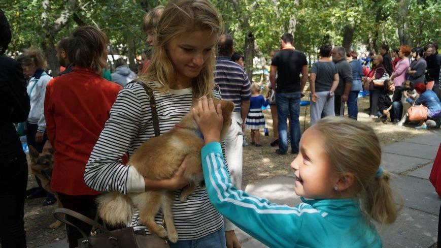 Выставка собак прошла в Бердянске (фото) - фото 4