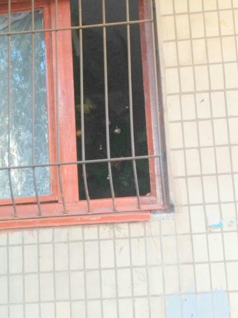 Кривой Рог за решеткой: Какие истории скрывают криворожане за прутьями оконных решеток (ФОТО) (фото) - фото 2