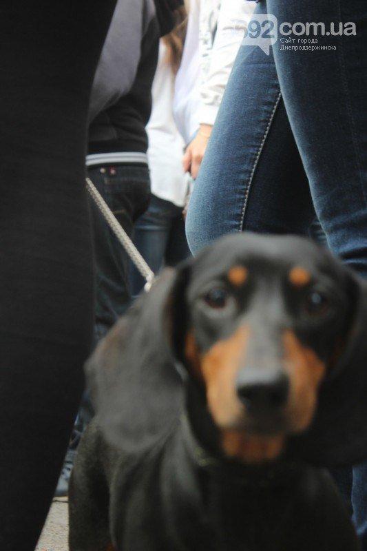 Благотворительный фестиваль бездомных животных состоялся в Днепродзержинске (фото) - фото 2