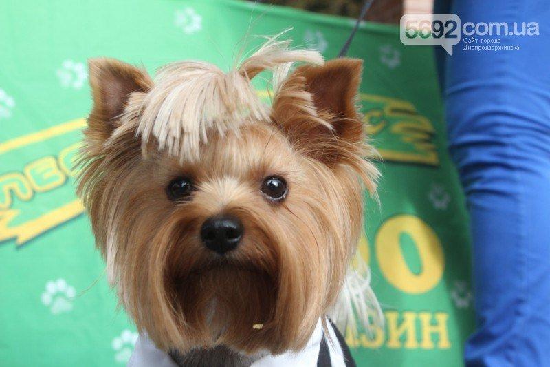 Благотворительный фестиваль бездомных животных состоялся в Днепродзержинске (фото) - фото 1