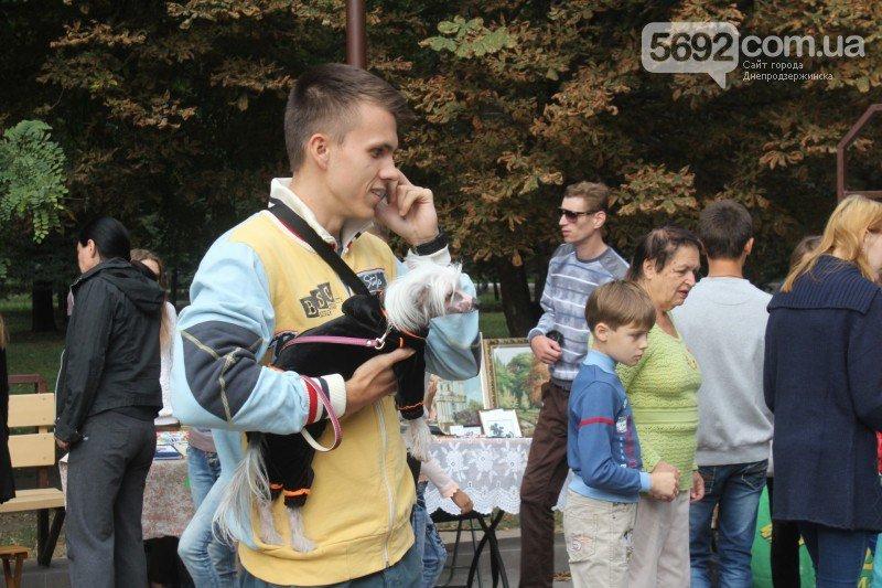 Благотворительный фестиваль бездомных животных состоялся в Днепродзержинске, фото-5