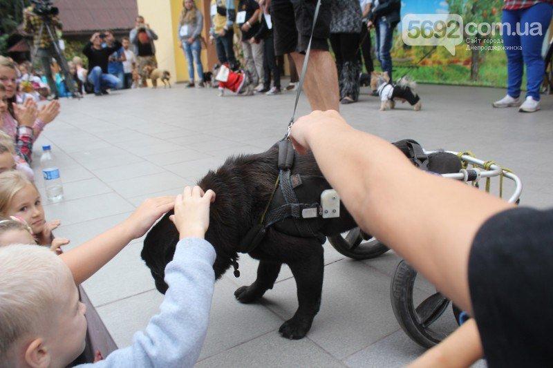 Благотворительный фестиваль бездомных животных состоялся в Днепродзержинске, фото-8