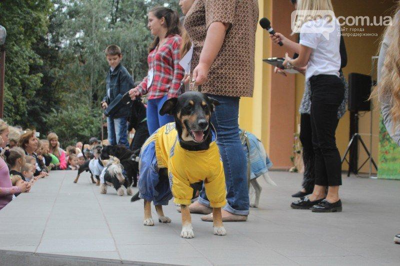 Благотворительный фестиваль бездомных животных состоялся в Днепродзержинске (фото) - фото 6