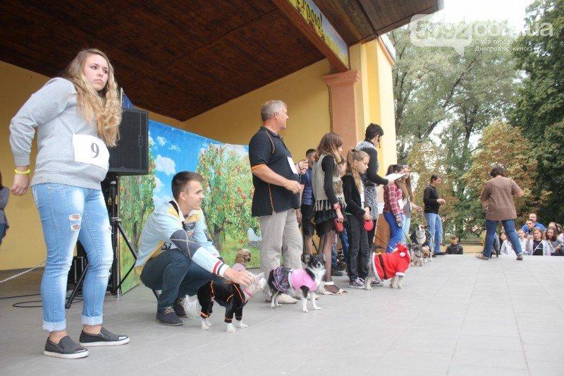 Благотворительный фестиваль бездомных животных состоялся в Днепродзержинске (фото) - фото 7