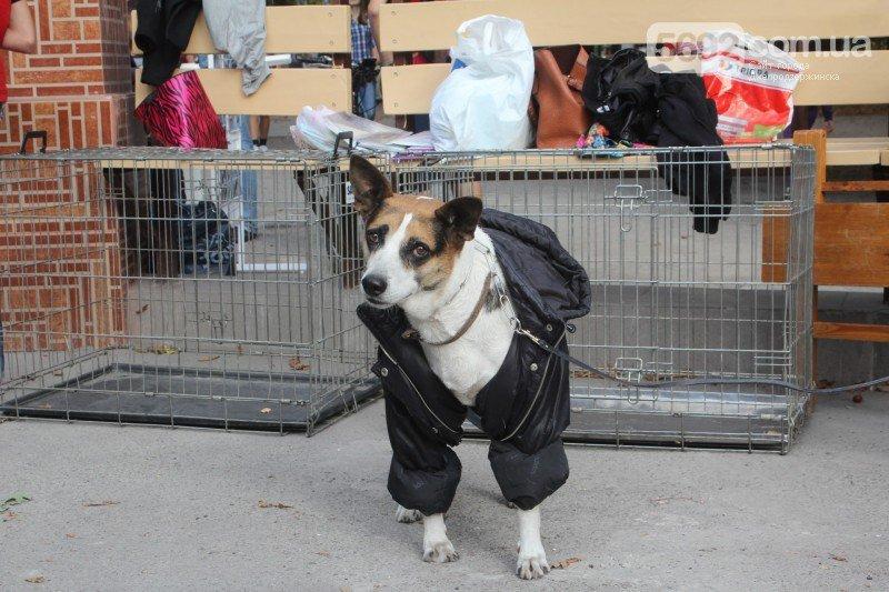 Благотворительный фестиваль бездомных животных состоялся в Днепродзержинске (фото) - фото 4