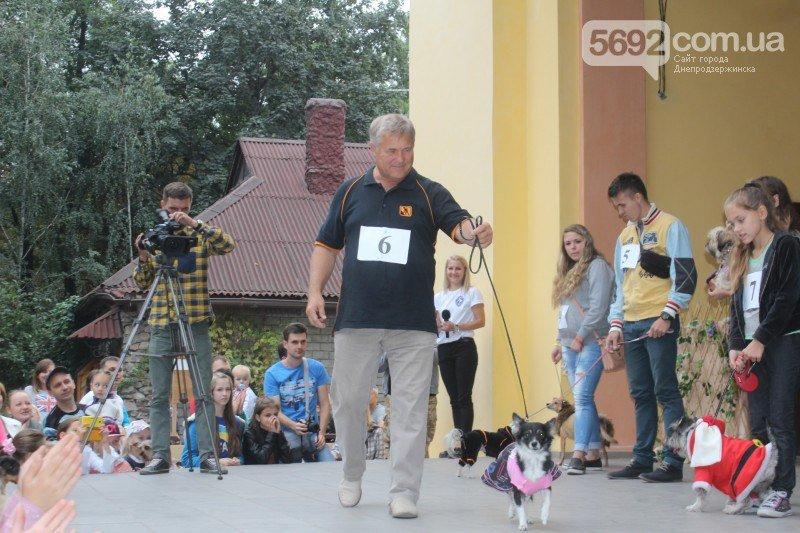 Благотворительный фестиваль бездомных животных состоялся в Днепродзержинске (фото) - фото 9