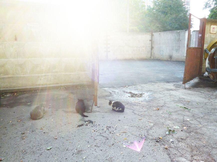 В Кривом Роге быстрыми темпами «латают» Заречный (ФОТО) (фото) - фото 2