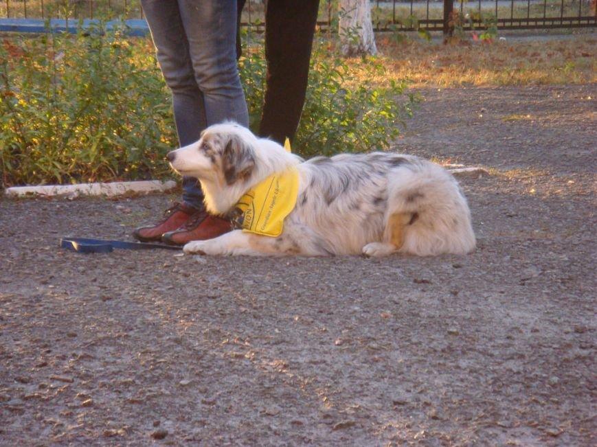 На Днепроретровщине лечат собаками (ФОТО), фото-1