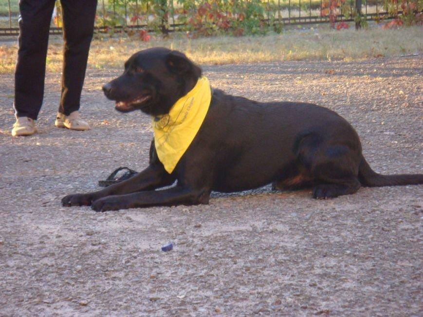 На Днепроретровщине лечат собаками (ФОТО), фото-2