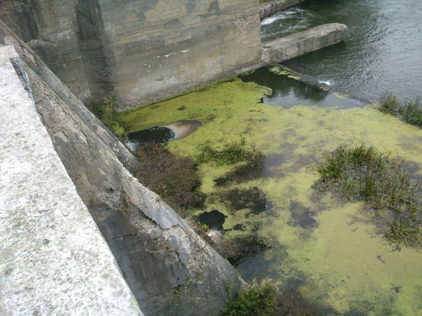 На Тернопільщині через викид у водойми небезпечних отрутохімікатів масово гине риба (фото) (фото) - фото 1